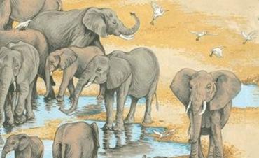 1522-1 Elefanten,Elephantes